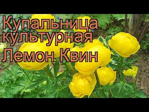 Вопрос: Какое название носит это растение, цветок (см. фото)?