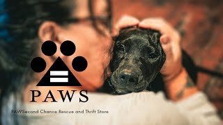 PAWSecond Chance Rescue and Thrift Store Promo
