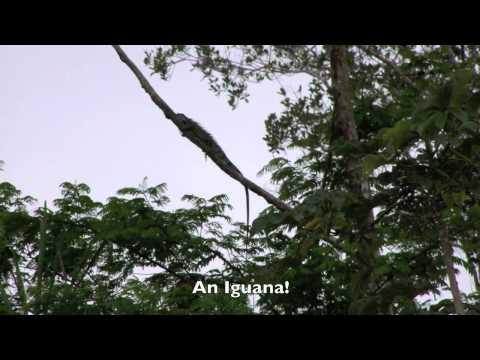 OAT Amazon River & Rain Forest