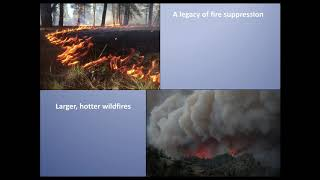 Matthew Hurteau - 'Wildfire and Carbon Management' Part 1