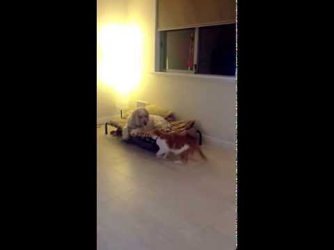 Cat and dog fight – Funny Cat Video