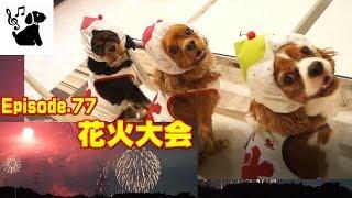 犬を花火大会に連れていけるほどの広さと視界のあるこの町。 想定観客3...