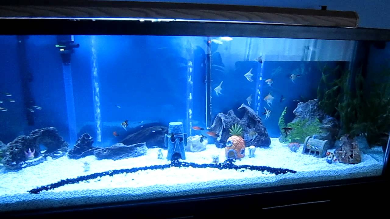Spongebob aquarium background 1000 aquarium ideas for Spongebob fish tank