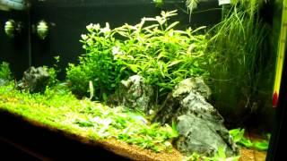 54l aquarium