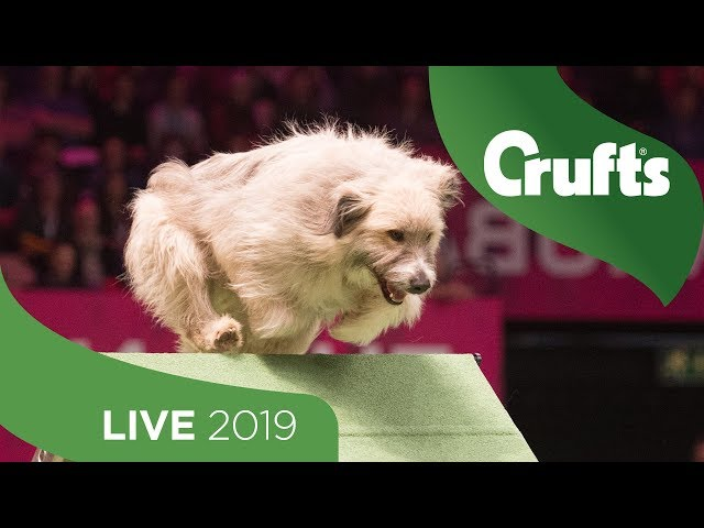 Crufts 2019 Day 2 - Part 2 LIVE