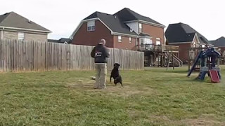 Pak Masters Dog Training Of Nashville With Bruno The Rottweiler