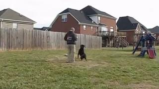 Pak Masters Dog Training Of Nashville With Bruno The Rottweiler
