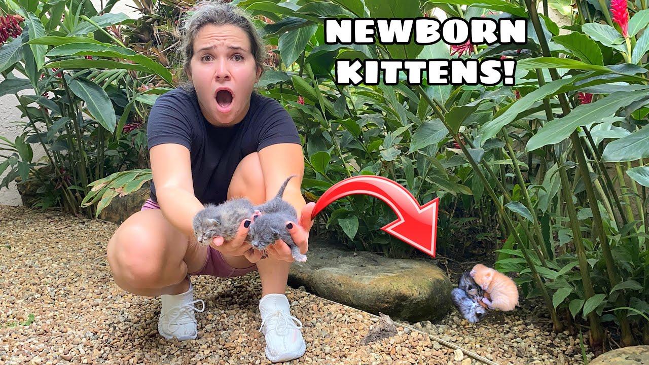 FOUND ORPHANED NEWBORN KITTENS!