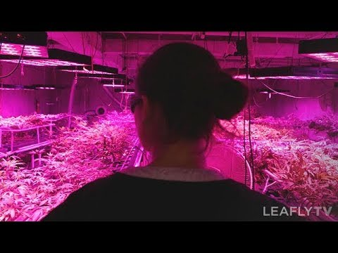 Growers Episode 2 - District Growers