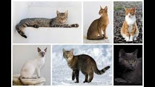 Russian Cats live action