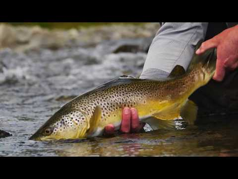 ORVIS -- How To Catch Trout In Shallow-Water Undercuts
