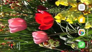 Spring Nature Live Wallpaper screenshot 5