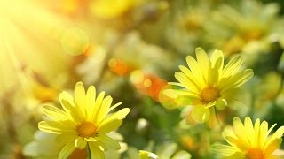 """4 hours of relaxing, peaceful, nature instrumental music, """"Morning's Soft Glow"""" by Tim Janis"""