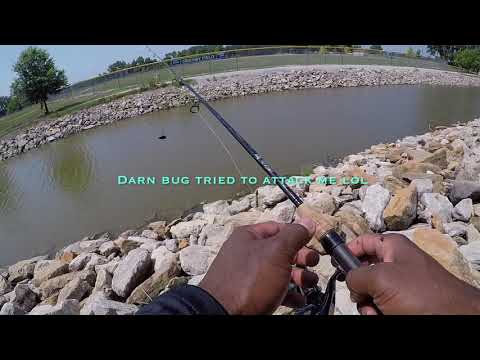 Catching Goldeye For Catfish Bait