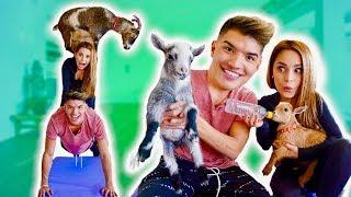 Baby Goat Yoga Challenge! (ft Rosanna Pansino)