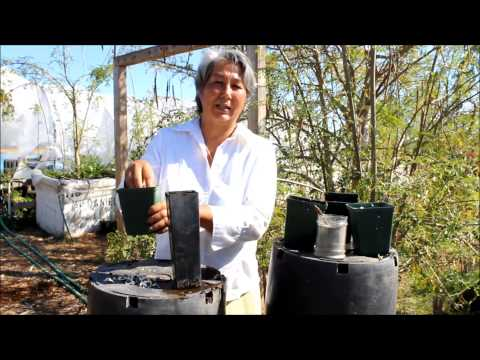 How to plant a Moringa Seed & Best Growing Conditions for Moringa