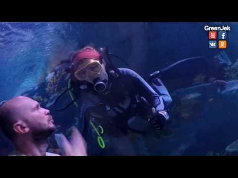 Vlog: Aquarium Forum Istanbul - Крутой Аквариум в Стамбуле