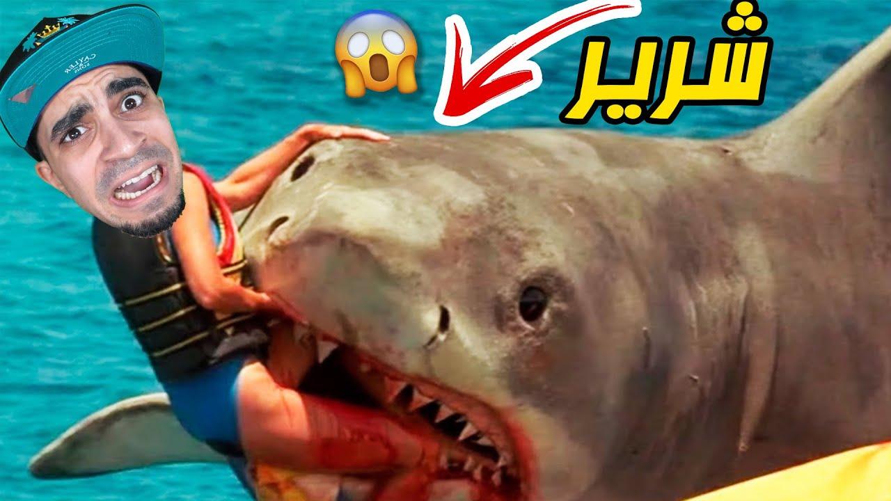 القرش الشرير