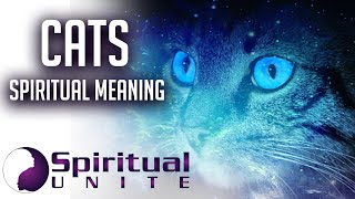 Cats Spiritual Meaning  More Than Just Furry Family