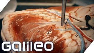 Ein funktionsfähiges Herzgewebe aus Spinat | Galileo | ProSieben