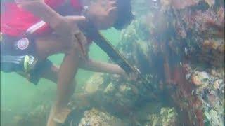 Bắn Được Cá Mú Trị Giá 1000 000 Khi Đang Bắt Bầy Cua Đá/catching rare fish
