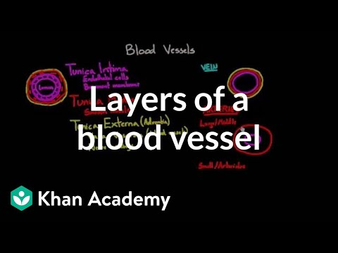 Layers of a blood vessel | Circulatory system physiology | NCLEX-RN | Khan Academy