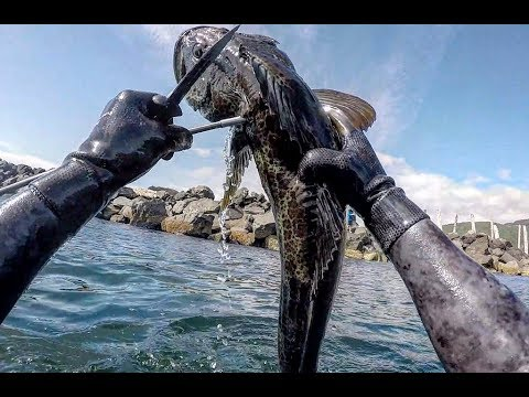 Spearfishing Lingcod's And Rock Crab