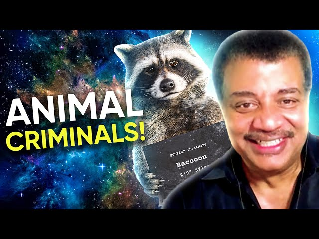 Cosmic Queries – Animal Outlaws & Rats' A**es with Neil deGrasse Tyson and Mary Roach