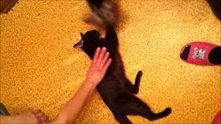 Дружба кошек и собак (Йорк и петерболд)