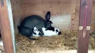 кроля сдох от секса