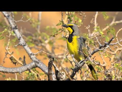 Namibia and Botswana Wildlife Slideshow - Part One