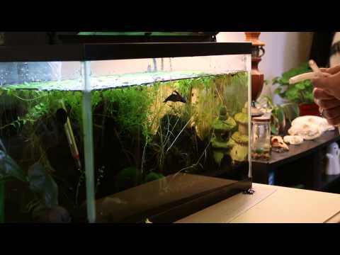 How to Clean a Planted Aquarium - Sand Substrate