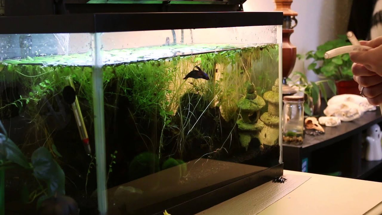 How To Clean A Planted Aquarium Sand Substrate