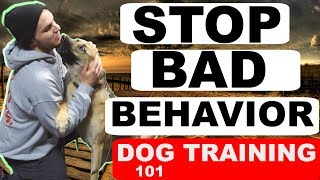 How to Understand and Train your Crazy German Shepherd Dogs 101!