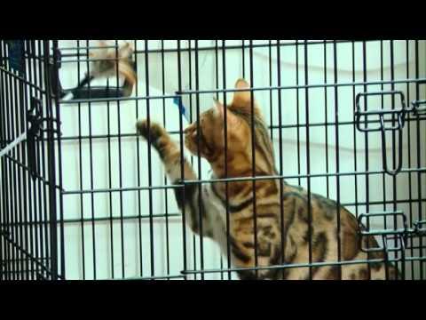11 11 14 Выставка кошек
