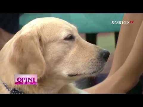 Stop Makan Daging Anjing! - Opini