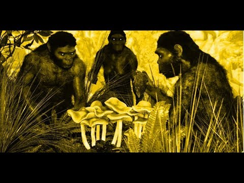 Stoned Ape Theory (Are Mushrooms Responsible for Human Evolution?)