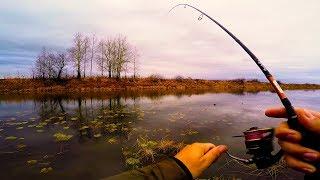 КАК ПОЙМАТЬ ОКУНЯ ,НЕ ЗАЦЕПИВ ОНДАТРУ! Рыбалка осенью