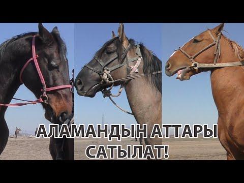 БУЛ АТТАР САТЫЛАТ / МИЛЛИОНДОН ЫЛДЫЙ / Тулпар KG