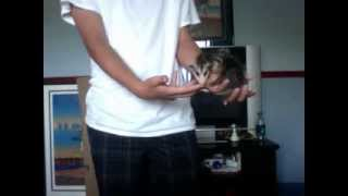 Pet Opossum Care