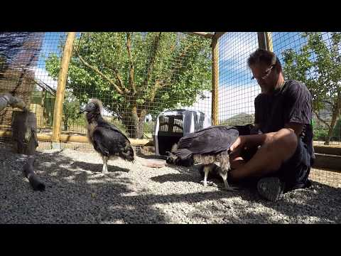 Parahawking Project Video Blog #3 - 27.6.17
