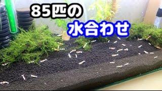 【レッドビー】水合わせ、お引越し♪【60センチ水槽】 thumbnail