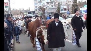Datini si obiceiuri - Parada mascatilor, ursilor, caprelor in Suceava - 27.12.2017