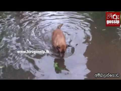 Floods reported islandwide