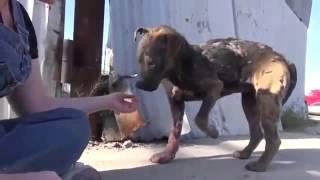 Девушка спасла собаку от гибели!