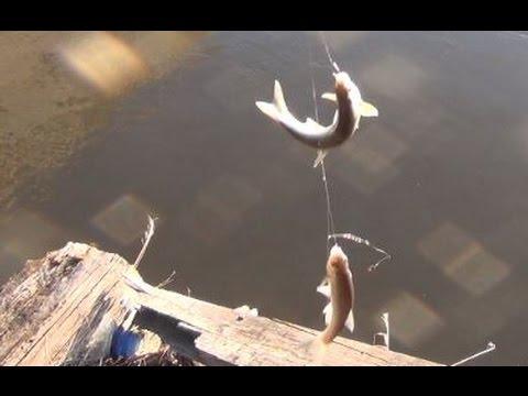 Наловил 3 ведра ельца, захватывающая рыбалка на ельца