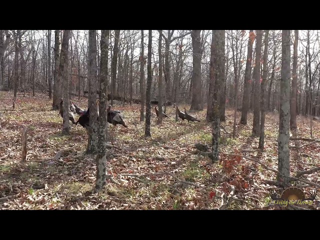 Turkey Hill | Camden County, Missouri
