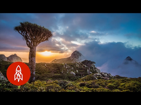 The Alien Beauty of Socotra Island