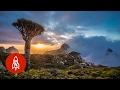 The Alien Beauty of Socotra Island