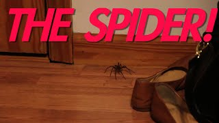 JESSE vs THE SPIDER!